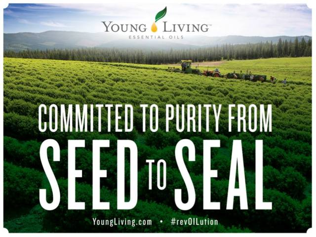 YL-Seed-to-Seal-